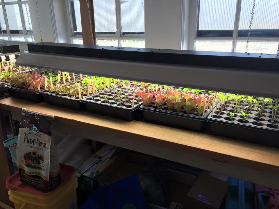 Produce Nursery