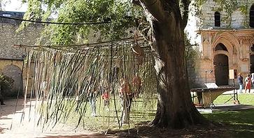arbre froler 2018.jpg