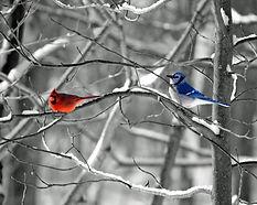 CardinalBlueJay.jpg