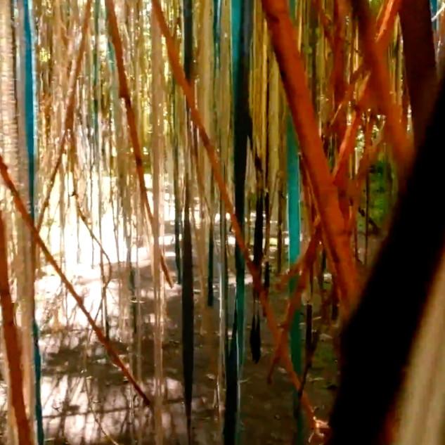 arbreafrolerlille-2.jpg