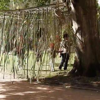 arbreafrolerorleans-2.jpg