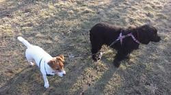 Ellie & Penny.jpg