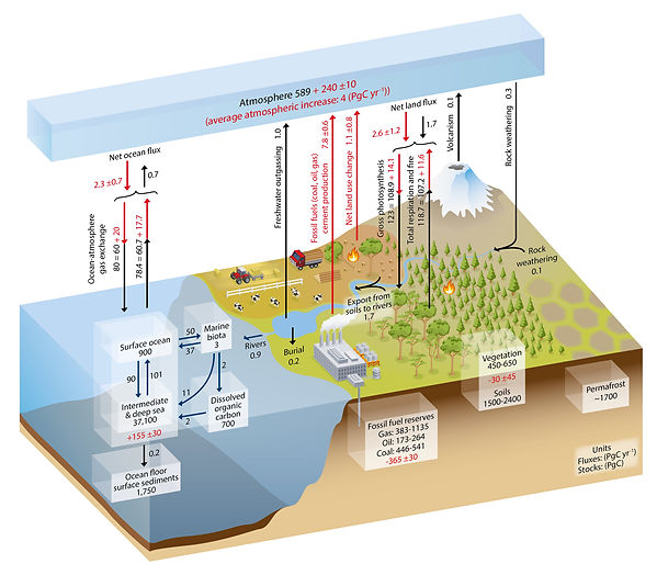 ICPP carbon Cycle Illustration.jpb.jpg