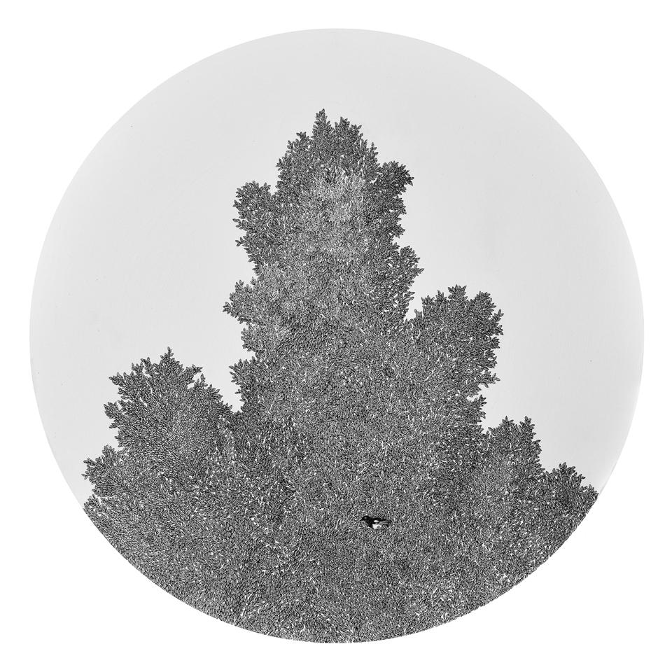 かささぎのいる木 / Tree of Magpie