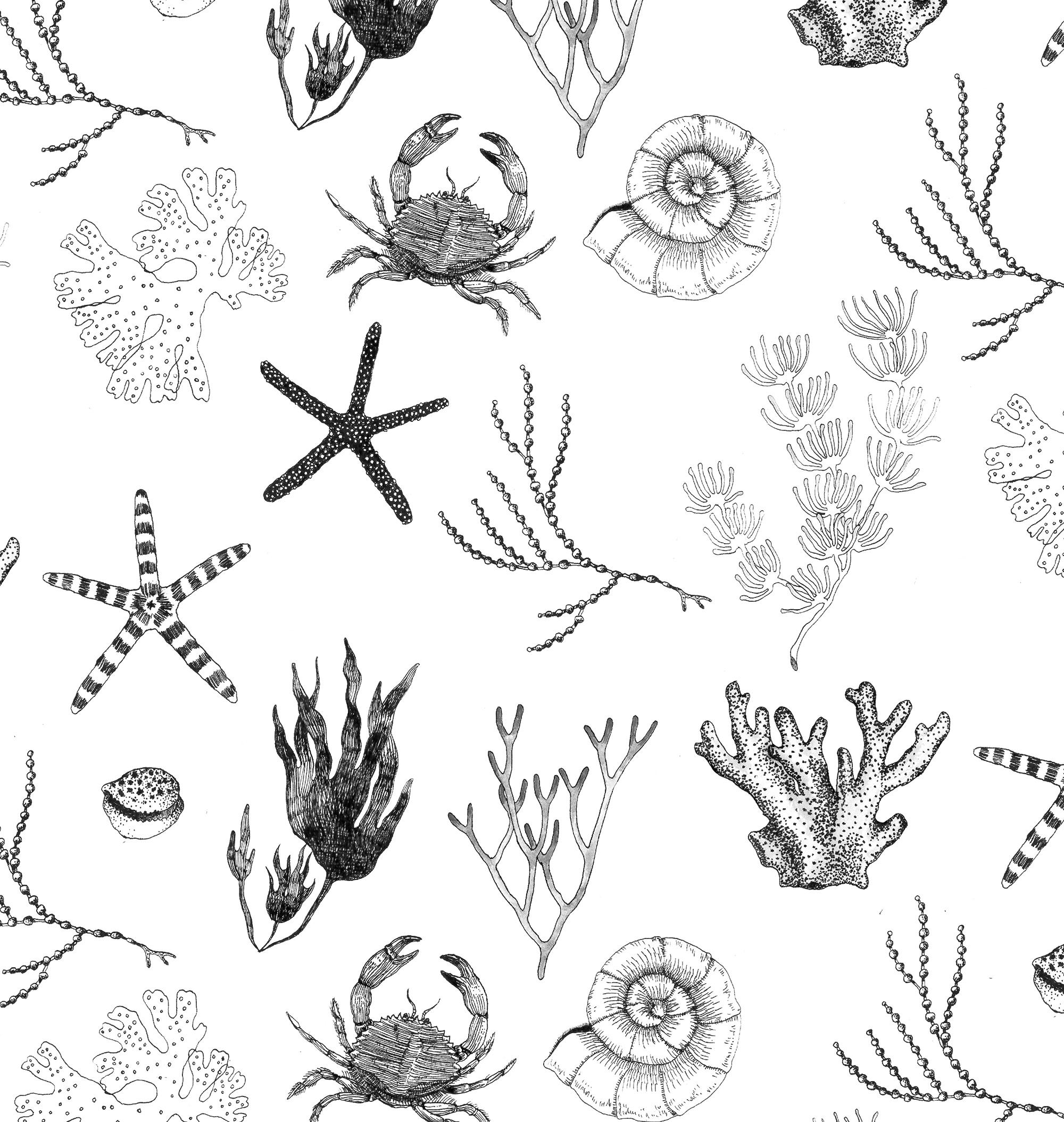 海洋生物 / Marine organisms