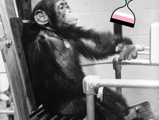 """Arcus Foundation - """"LGBT"""" NGO, Great Apes and the Mission of Gender Identity Ideology"""