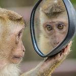 monkey-3512996_1920-678x381.jpg