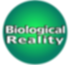 biorealitylogo.png