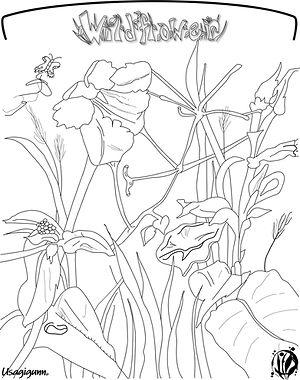 Wildflower.jpg