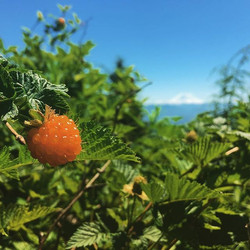 I was going to work out, but then I found the Salmonberries
