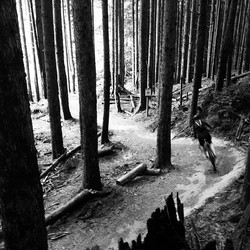 Great start to the Labor Day weekend #tigermountain #biking #mtbiking #trek #mtb #brownpow #cycling