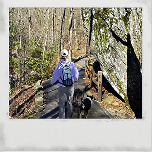 North Carolina hiking with dogs
