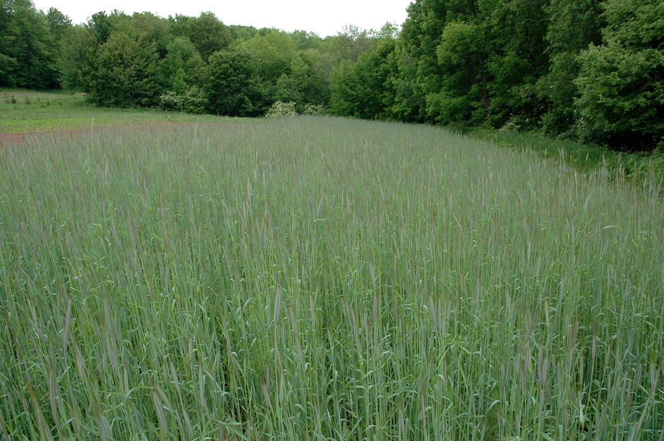How to Grow a Food Plot Free of Weeds and Grasses