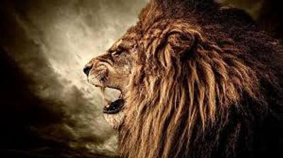 lionroar.jfif