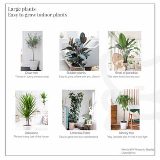 Easy to grow indoor plants