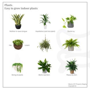 Plants that grow easy indoors
