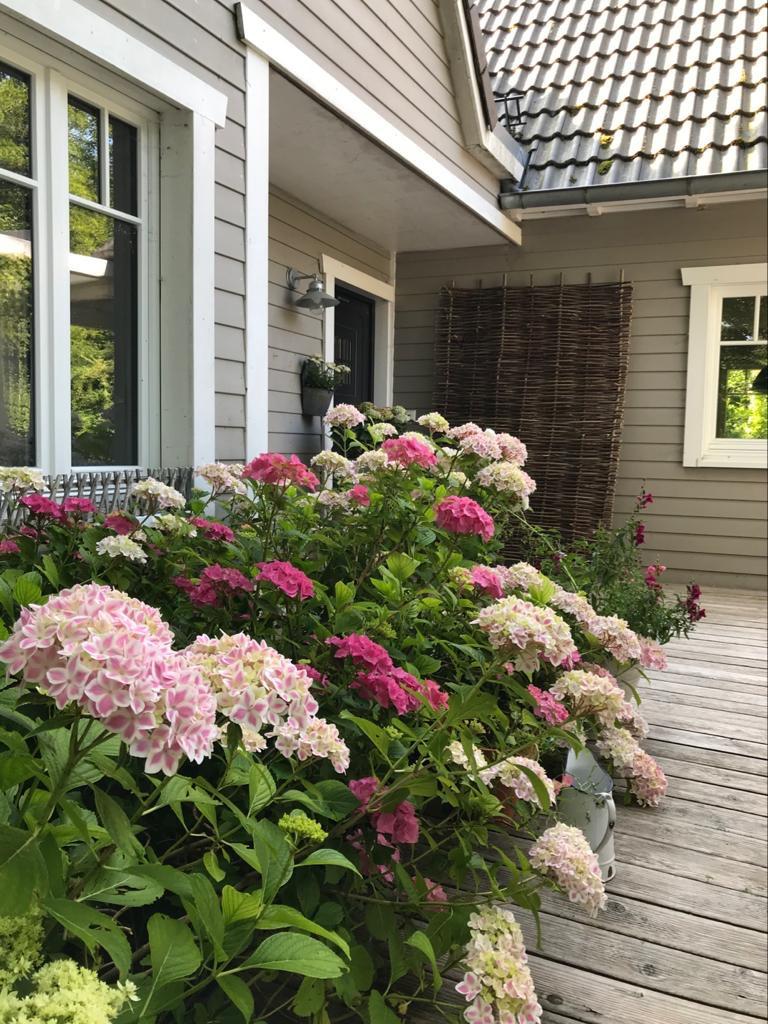 Hortensie hellrosa und weiß auf Veranda