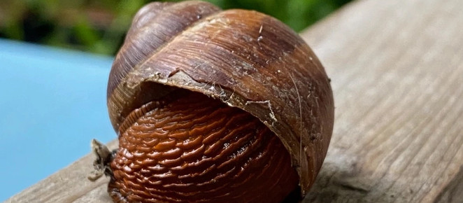 40 PLANTS THAT SLUGS & SNAILS WILL LEAVE WELL ALONE