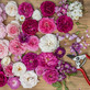 CHOOSING THE RIGHT ROSE | Or which rose will work best in my garden?