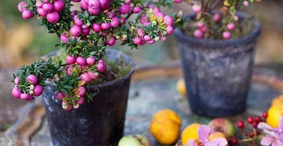 EIN ZAUBERHAFTER GARTEN IN DEN GRAUEN MONATEN? 14 Ideen für Deinen Garten im Winter