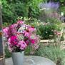 DER COTTAGE GARTEN IN DER VASE - Die besten Schnittblumen aus dem eigenen Garten