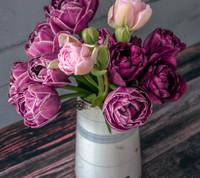 FÜR EINE GRANDIOSE FRÜHLINGSSHOW: Runter von der Couch und jetzt Blumenzwiebeln pflanzen!