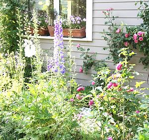 Cottage garten pflanzen  My Cottage Garden - Gartenblog