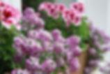 Blumen im Cottage Garten - Gartenblog
