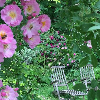 Karotten im Cottage Garten - Gartenblog