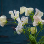 COOL FLOWERS - NUR DIE HARTEN KOMMEN IN GARTEN