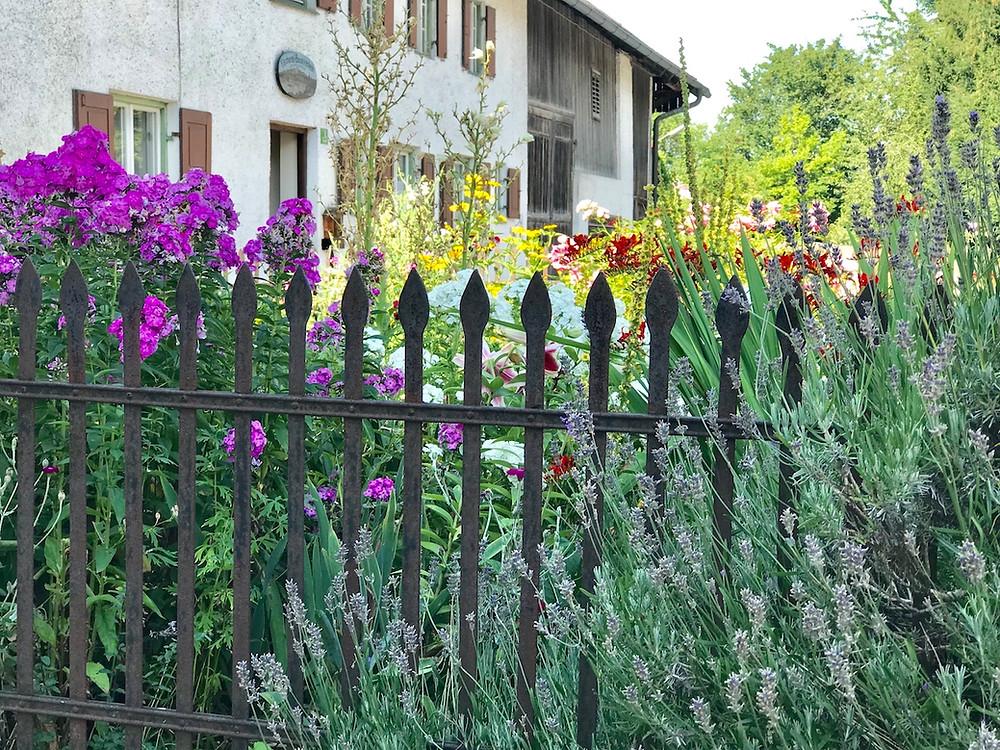 Bauerngarten vor Hof mit Lavendel und Phlox