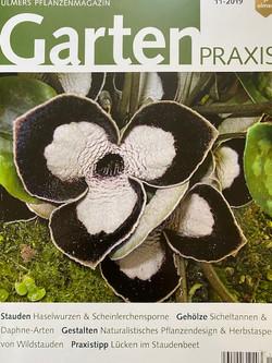 Gartenpraxis Magazine | My Cottage Garden Feature