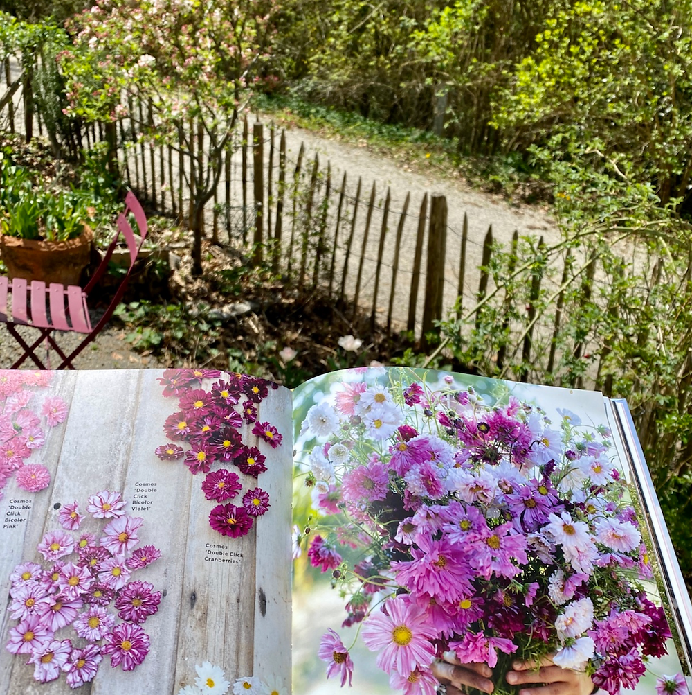"""Planning my flower bed with the help of """"A Year in Flowers"""" by Erin Benzakein."""