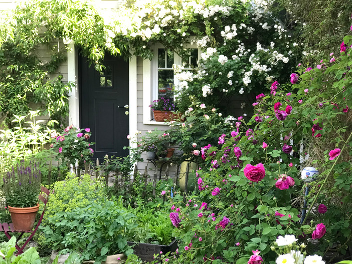 PRUNE YOUR ROSES WITH CONFIDENCE | Top tips from an expert that anybody can try