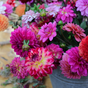 DELIGHTFUL DAHLIAS – A sea of color for your garden