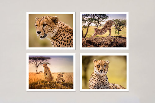 Cheetah Note Cards, Set of 4