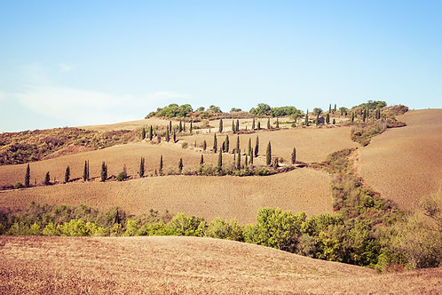 Cypress Lane | Winding Road Lined With Cypress Trees in Tuscany Italy | Tuscany Photo Print | Tammy Riegel Photography