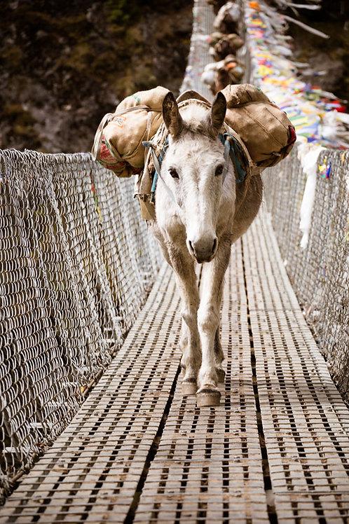 Nepal Donkeys