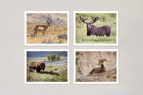 Wildlife Note Cards, Set of 4