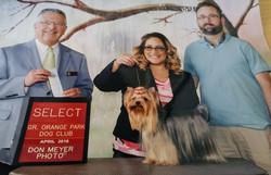 Winner at Orange Park Dog Club