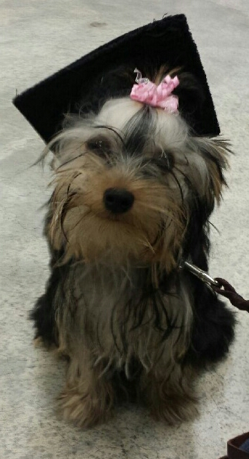 Gracie Lou Puppy Graduation
