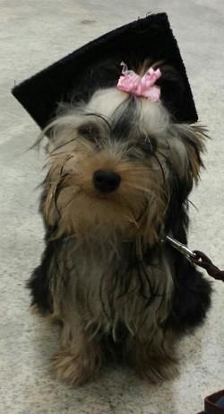 Gracie Lou Puppy Graduation