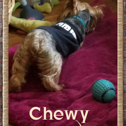 Chewy Security Shirt Playing 2017