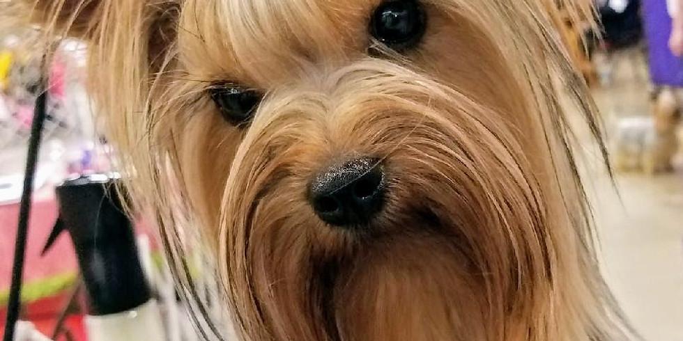 Tallahassee (Greater Panama City Dog Fanciers Association) Dog Show
