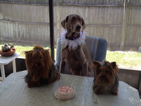 Amber (RIP) with Chewy & Harley
