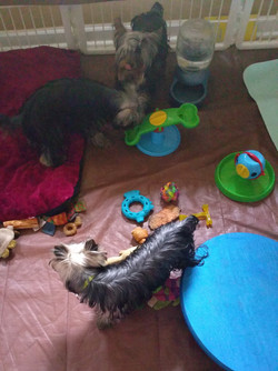 Gracie Lou first litter - figuring out reward puzzles