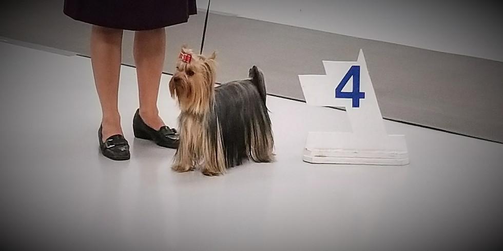 Lakeland Dog Show