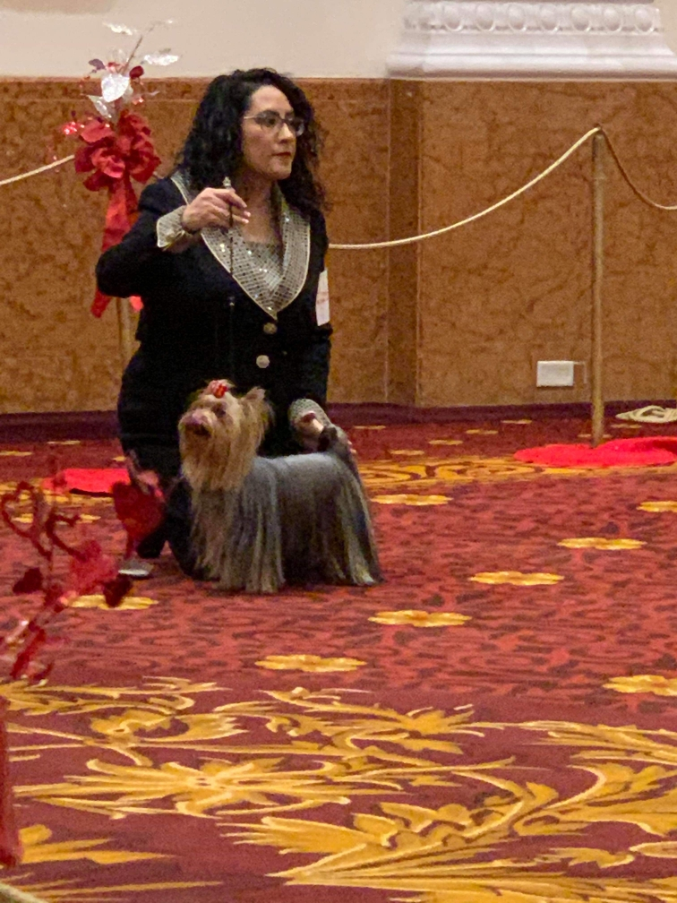 Gypsy in action at Westminster