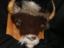 Wooly-Bully Atrophy