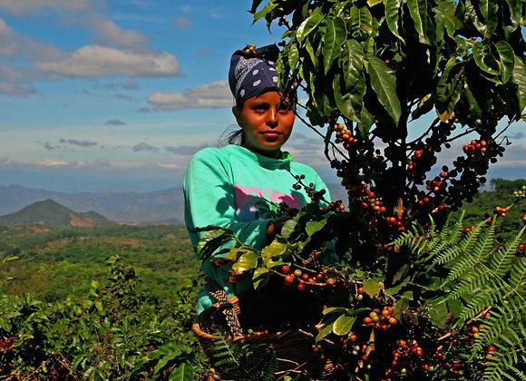No.1 El Salvador (Single Origin RainForest Alliance)